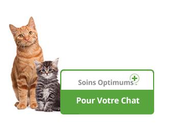 optimum-care-cat